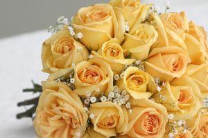 zolte roze